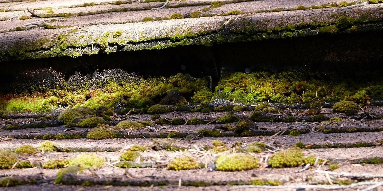 De la mousse sur les tuiles : demandez vite un démoussage de la toiture par IsolToit